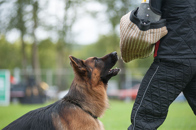 Dog Bites: We'll Help You Receive the Damages you Deserve